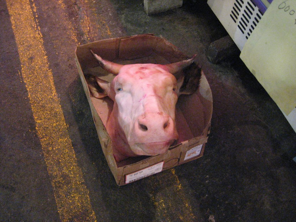 a shaved cows head in a cardboard box on the ground